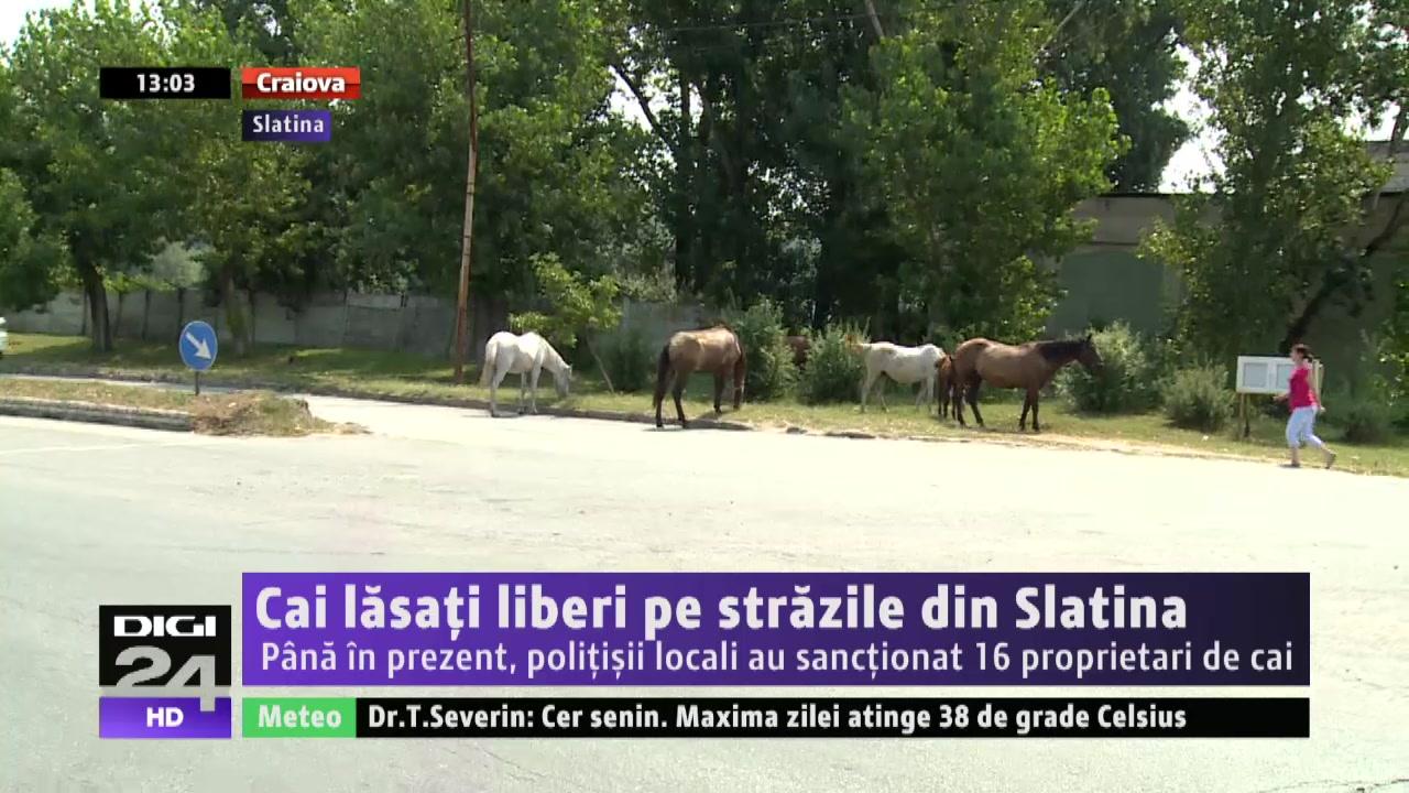 VIDEO | OLT. Cai lăsaţi liberi pe străzile din Slatina. Până în prezent, poliţişii locali au sancţionat 16 proprietari de cai